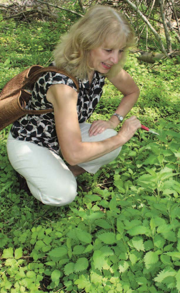 Carolyn Langdon looking at plants
